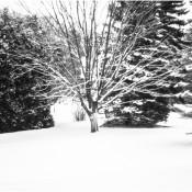 Winter in True Black & White