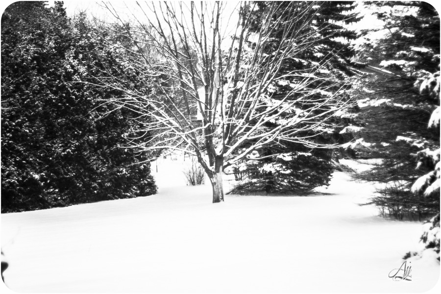 Winter in True Black & White